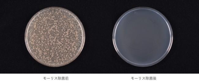 除菌効果試験画像