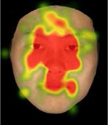 「清潔感」の印象を評価する際の注視部位