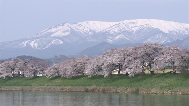 写真提供:仙台市観光課