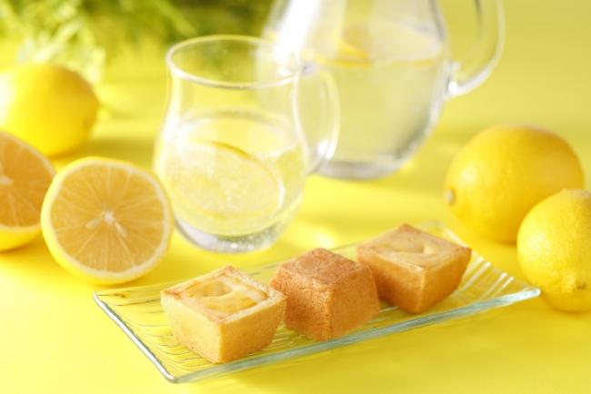 夏のチーズケーキ(レモン)イメージ(箱なし)