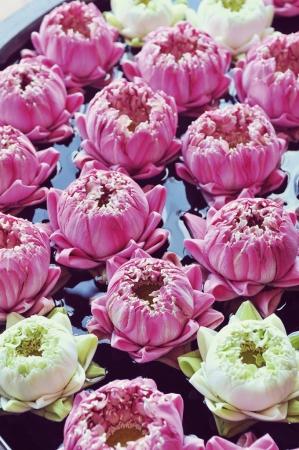 レストランやホテルなどでよく目にする蓮の花は、カンボジアの日常生活の中に溶け込んでいます(C)若林聖人