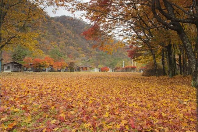 昨年(2019年)11月上旬の景色 かじか荘に隣接する「銀山平キャンプ場」の景色