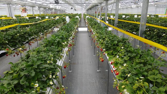 8品目156品種の果物の摘み取り体験が可能