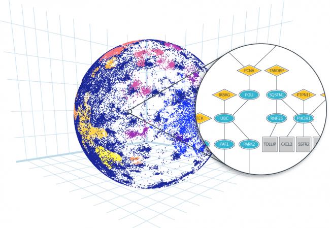 Cascade Eyeにより解析した論文や医学データは位置情報に変換、球状にプロットされる(左)。さらに、遺伝子や分子の関連性や発生順序が経路図=パスウェイマップに表現される(右)。