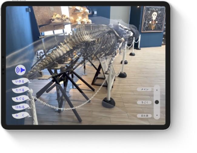 図2:透過モード(骨格や内臓を表示)