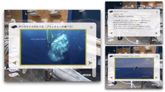 図5:オーバーレイ画面(ザトウクジラの生態情報を表示)