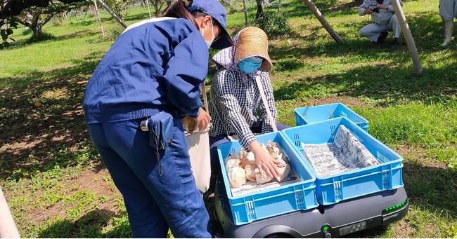運搬支援ロボットに載せたコンテナに収穫した梨を並べる。