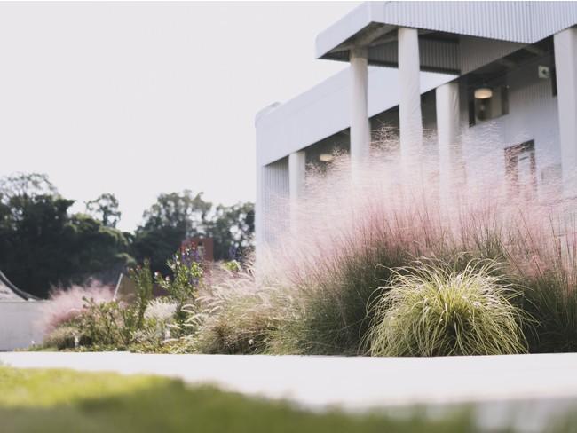 屋上庭園植栽は、鹿屋市に本拠地をもつAraheam