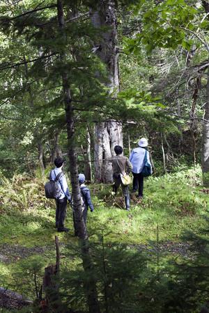 エレナ・トゥタッチコワ 2018年に企画をしたシレトコ・ウォーキング・プロジェクト 「獣道Animal Paths」記録写真 開催場所は知床半島内の森