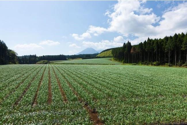 ▲宮崎県小林市の夷守岳を望む「本多荘輔の情熱にんにく畑」