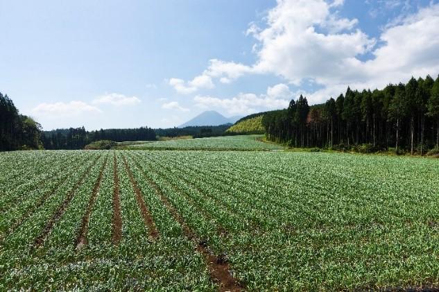 宮崎県小林市の夷守岳を望む「本多荘輔の情熱にんにく畑」