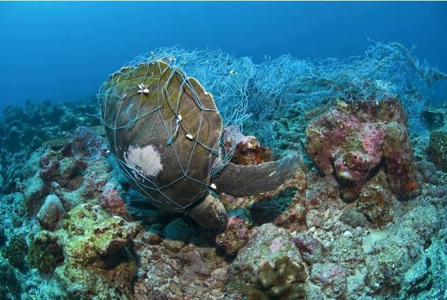 廃漁網の被害を受けるのはウミガメなどの水中生物