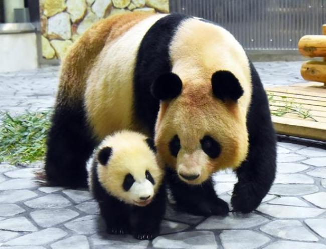 和歌山にかわいいパンダを見に行こう!