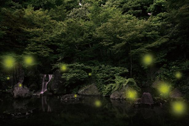 ホタルイベントも関西各地で開催します