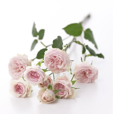 バラ<<花時間>>