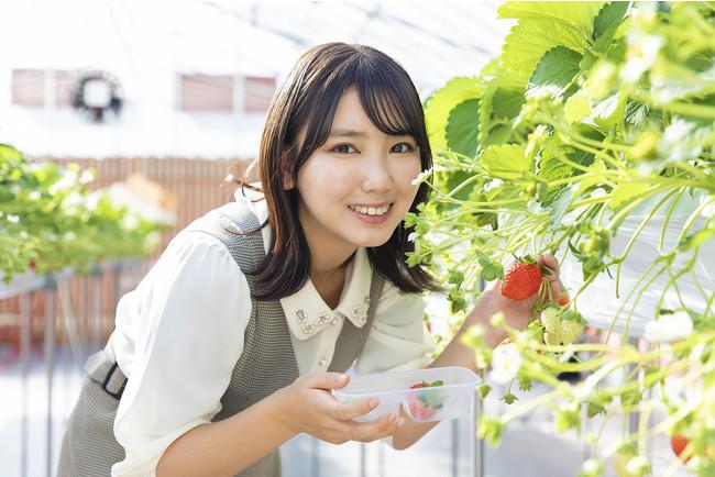 名古屋市出身・沢口愛華さんが滋賀県東近江市の「いちご ぷらんと」で食べ比べを体験
