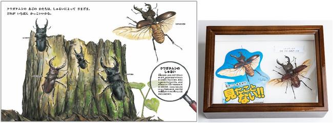 ※ライブ標本と実際の絵 (『『すごい虫ずかん ぞうきばやしを のぞいたら』より』