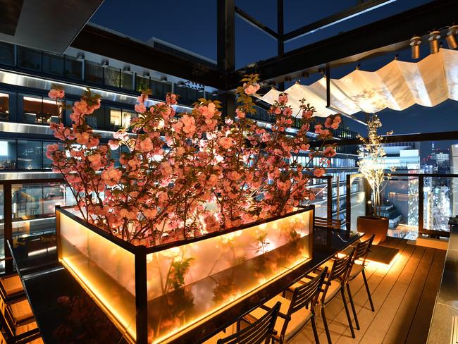 13階から屋上に突き抜ける満開の八重桜