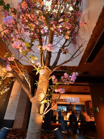 13階テラス席からの八重桜