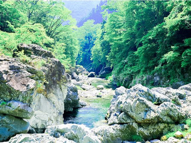 檜原村を流れる清らかな秋川。鮎や野鳥など多くの動植物が生息します