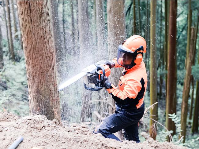 間伐は、森林の健全な生育のために行われる大切な作業