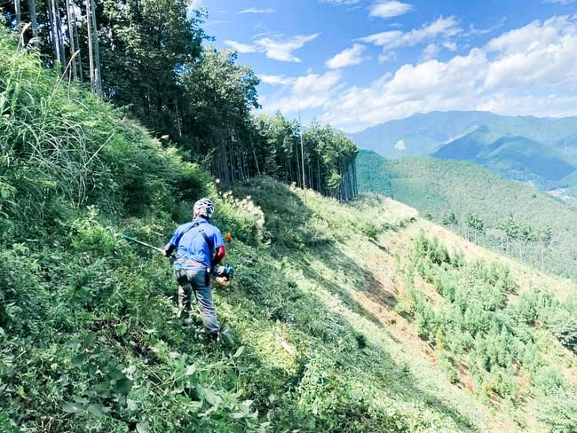 計画的な伐採は、山に新しい伊吹をもたらします