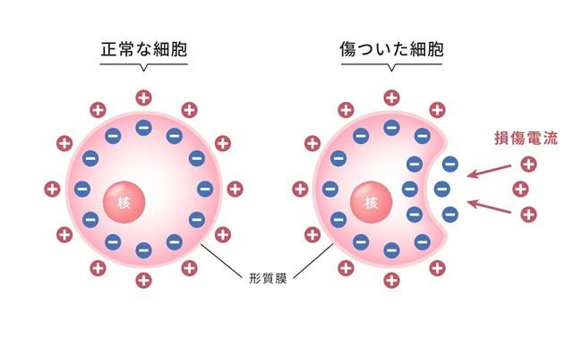 マイクロカレント説明図