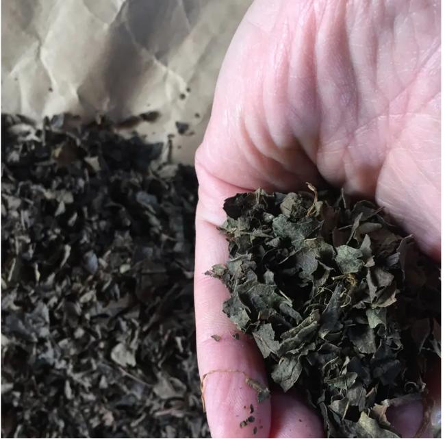 SOUSUKE柿の葉茶 薪火焙煎