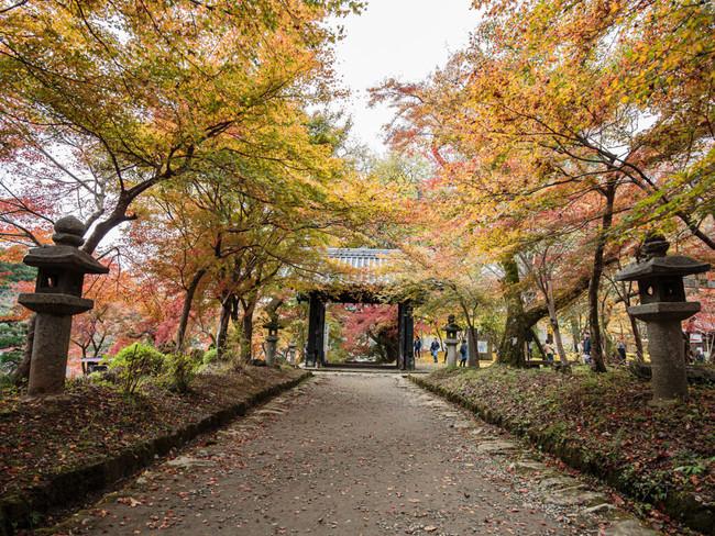 秋月城跡(あきづきじょうせき)