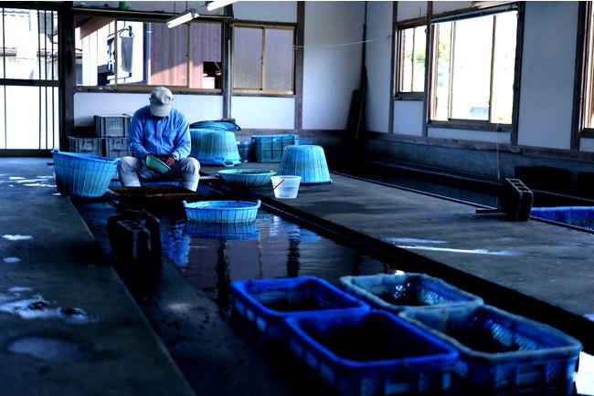 江戸寛政5年より生産・加工を代々受け継ぎながら、天然のスイゼンジノリの自生を手助けする為に、黄金川の水質保護や管理にも日々尽力されている歴史ある「川茸元祖 遠藤金川堂」。