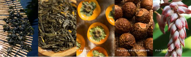 左から、スイゼンジノリ、(以下写真はイメージです)チャ葉エキス、カキタンニン、サピンヅストリホリアツス果実エキス、ゲットウ花・葉・茎水