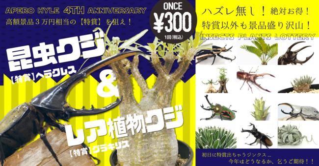 今年もやります!毎年恒例、大人気の昆虫クジ&レア植物クジ! 【第1弾】
