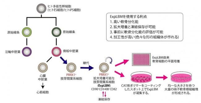 研究の概略図