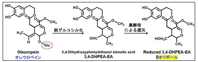オリーブ葉中の オレウロペイン から Bオリボール ヘの変換反応