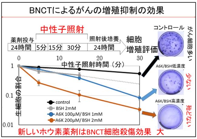 ホウ素中性子捕捉療法(BNCT)によるがんの増殖抑制の効果