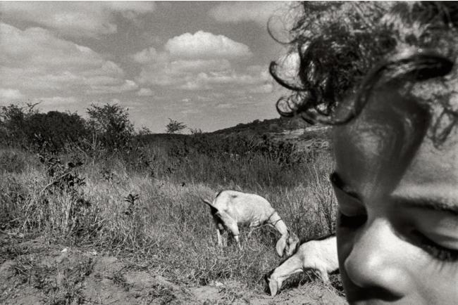 ティアゴ・サンタナ《アラゴアス州、パウメイラ・ドス・インディオス》 2003 年 (C)Tiago Santana