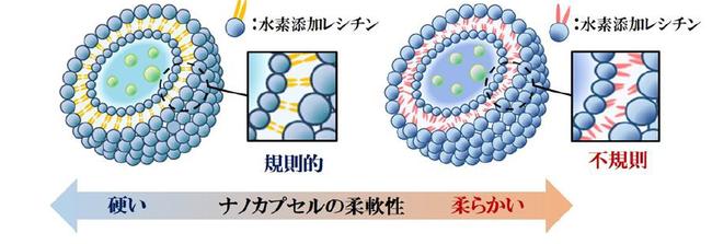 図3ナノカプセルの膜構造と柔軟性に関するイメージ図