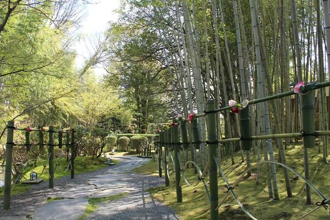 竹の回廊に並ぶ椿※画像は過去開催の時