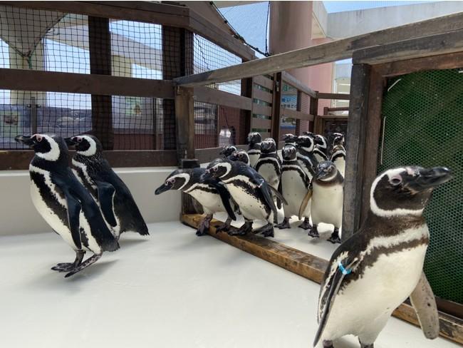 ペンギン飼育エリア