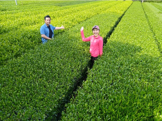 茶畑セラピー in 宮野園 by CHA-Link