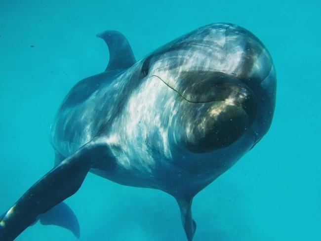 イルカにとってもハッピーな活動にならなければ意味がありません。