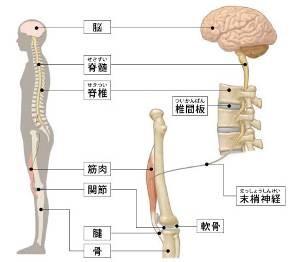 出典:公益社団法人 日本整形外科学会HP