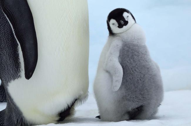 ニッコリペンギン