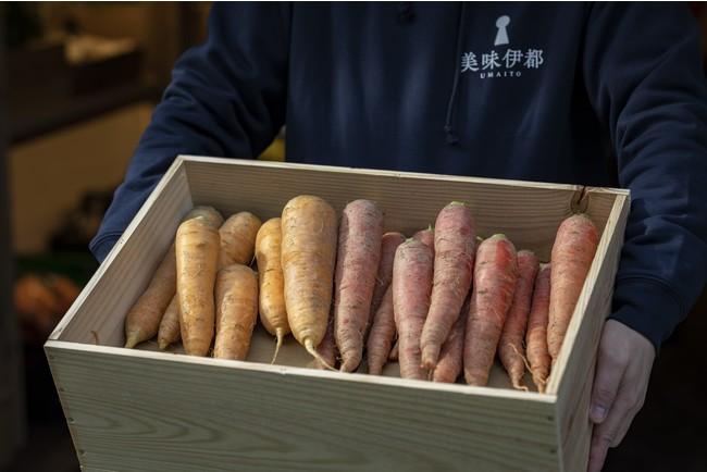 糸島市から集められた新鮮な野菜