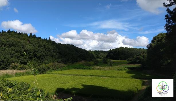 椿ファームの千葉県印旛郡酒々井町の里山バンク