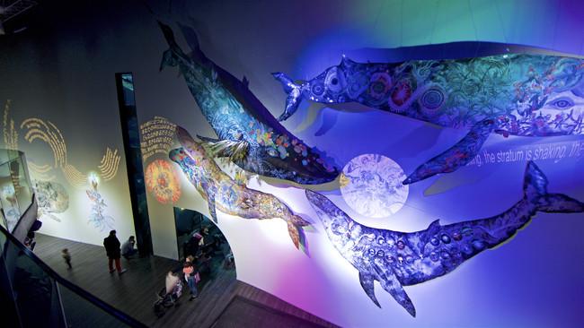 L'oeil de la Baleine 鯨の目 パリ・アクアリウム、 フランス、 2019(Photo by Serge Koutchinsky)