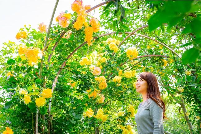 黄金のバラの庭
