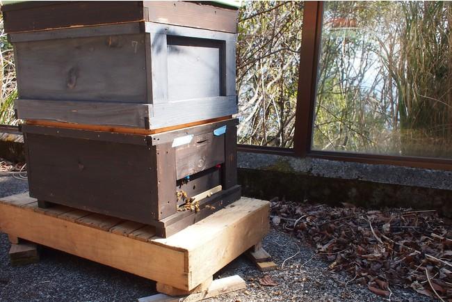 園内に設置した巣箱