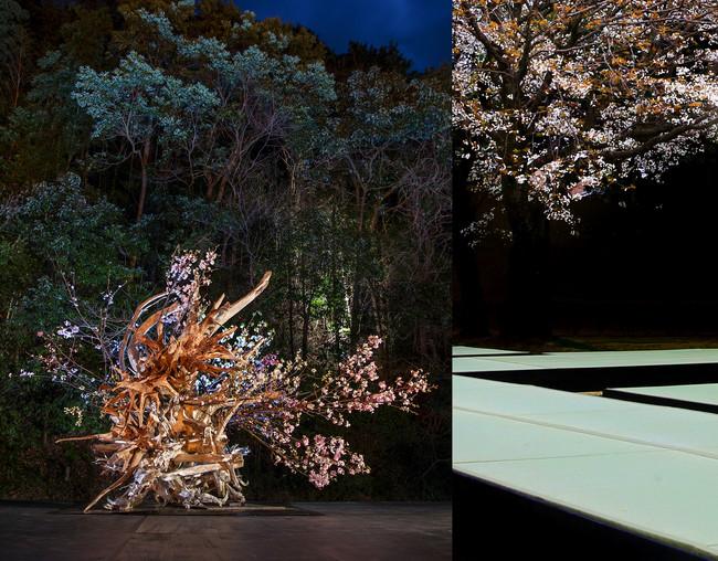 華道家 辻雄貴による、桜のインスタレーションと 春の庭を愉しむ「花見席」を空間演出。