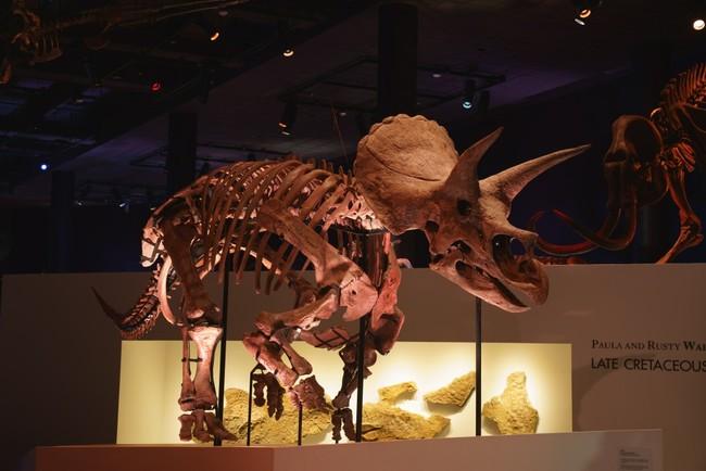 ※ヒューストン自然科学博物館所蔵